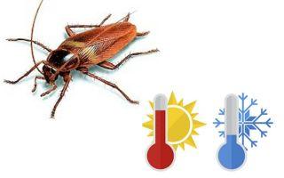 Apartmanda korkan hamamböceği nedir?