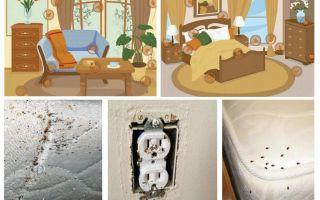 Apartmanda tahtakuruları ile etkili mücadele