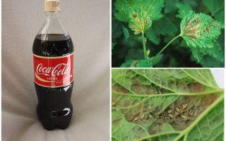 Aphid gelen Coca-Cola