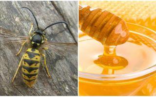 Yaban arıları bal yapmak ya da değil
