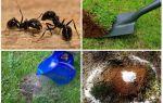 Bahçe halk ilaçları karıncalar nasıl kurtulmak