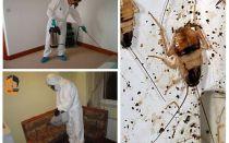 Apartmanda hamamböceği imha