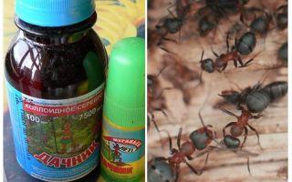 Karıncalardan gelen yaz mevsimi anlamına gelir