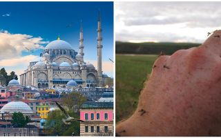 Türkiye'de sivrisinekler var mı