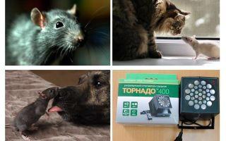 Fareler ve fareler ne korkuyor?