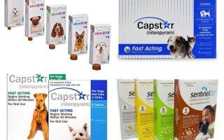 Köpekler için pire ve keneler için tabletler
