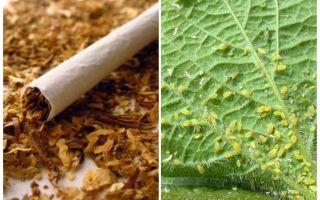 Yaprak bitlerine karşı tütün