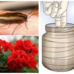 Hamamböceği için ilaçlar-1