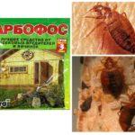 Bedbugs-1'den Karbofos