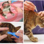 Hayvan tedavi kuralları