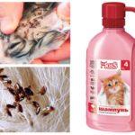 Yavru kedi için pire şampuanı