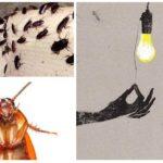 Hamamböcekleri ışıktan korkuyor