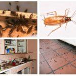 Evde hamamböceği