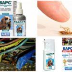 Hamamböceği-1 gelen leopar
