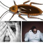 Hamamböceği korkusu