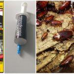 Hamamböceği gelen dohlox