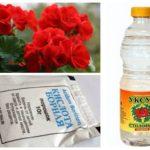 Hamamböceği için halk ilaçları