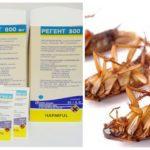 Regent 800 hamamböceği