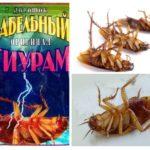 Hamamböceği-1 gelen Thiuram