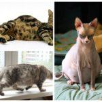 Hamile kediler
