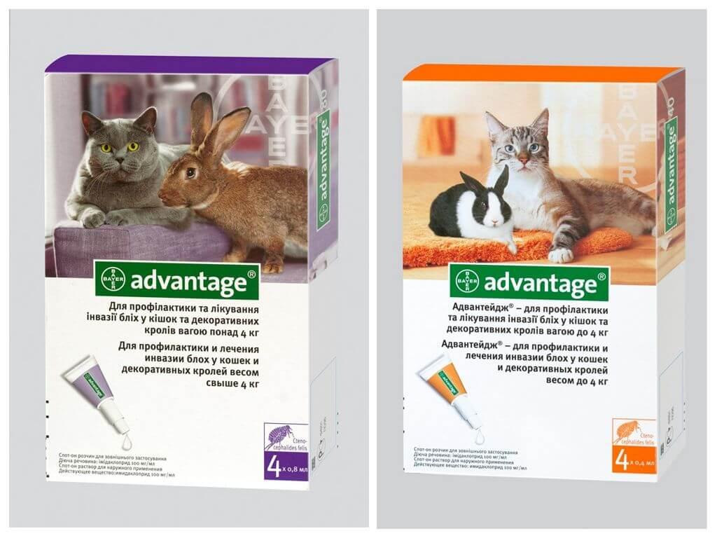 Tavşanlar için pire düşer