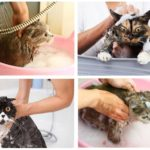 Banyo şampuanı kedi