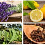 Pire için Bitkiler