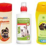 Köpeklerde pire şampuanı