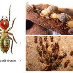 Çalışma termit