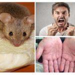Kemirgen Hastalıklar