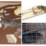 Sıçanlar mücadele