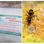 Karıncalardan Borik Asit