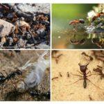 Karınca uygarlığı