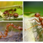 Böcek uzuv işlevleri