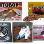 Sıçanlardan kimya