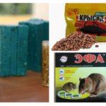 Sıçanlardan kimyasallar