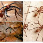 Göçebe katil karıncalar