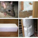 Sıçan ve köpük