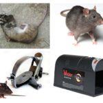Sıçan tuzağı