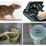 Sıçan tuzakları