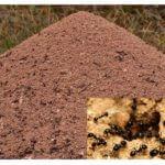 Karınca yuvası görünümü