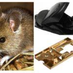 fare kapanı