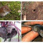 Bahçedeki fareler