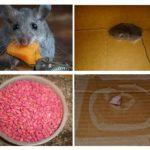 Garajdaki fareler