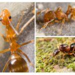 Karınca görünümü