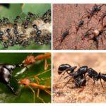 Karıncalar hayat