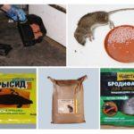 Sıçanlar için zehir