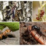 Doğada böcekler için gıda