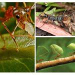 Böceklerin faydaları