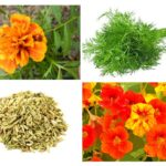 Zararlı bitkiler
